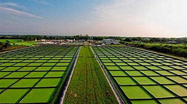 Выращивание водорослей для биодизеля