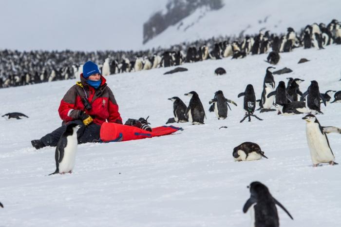 Пингвинчики. Фото laurenfarmer.com
